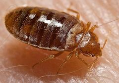 bedbug treatments galway